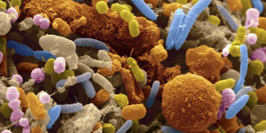 La microflora intestinale